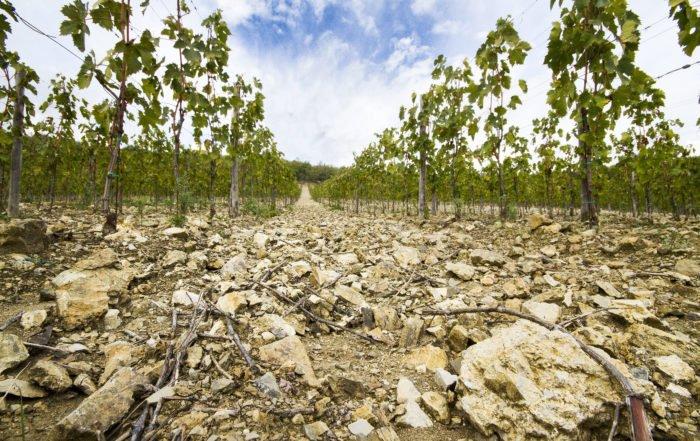 Fattoria Aiola vineyards