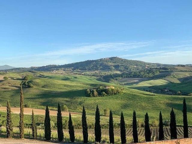 Altesino Vineyards