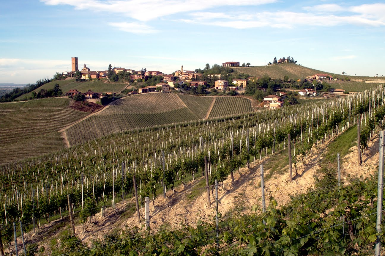 Piedmont hill town and vineyards