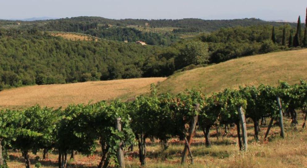 Castello di Bossi Vines