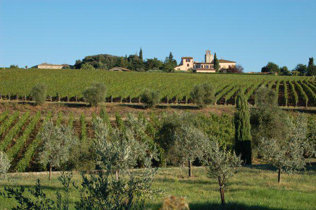 Canonica Vines