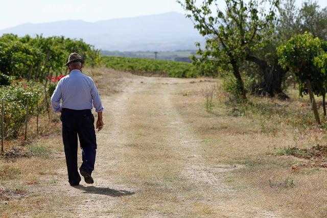 Italian man strolling a country road near vineyards