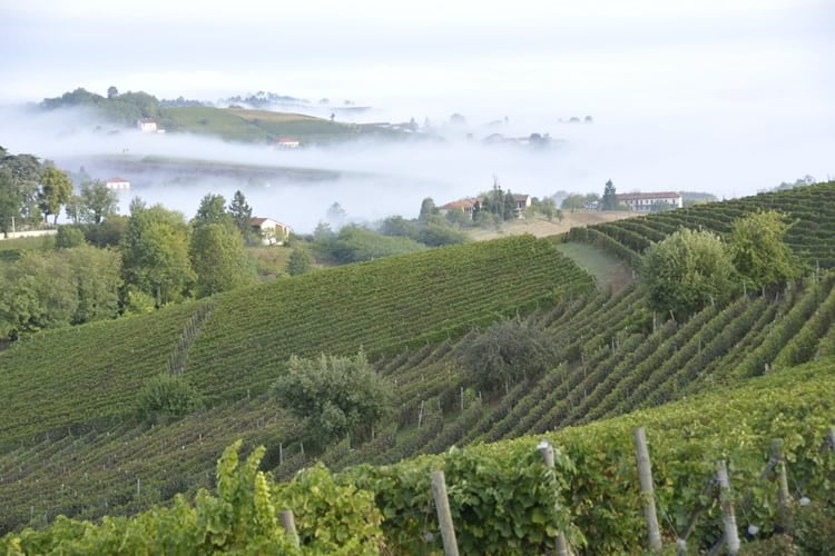 Cascina Castlet vineyards