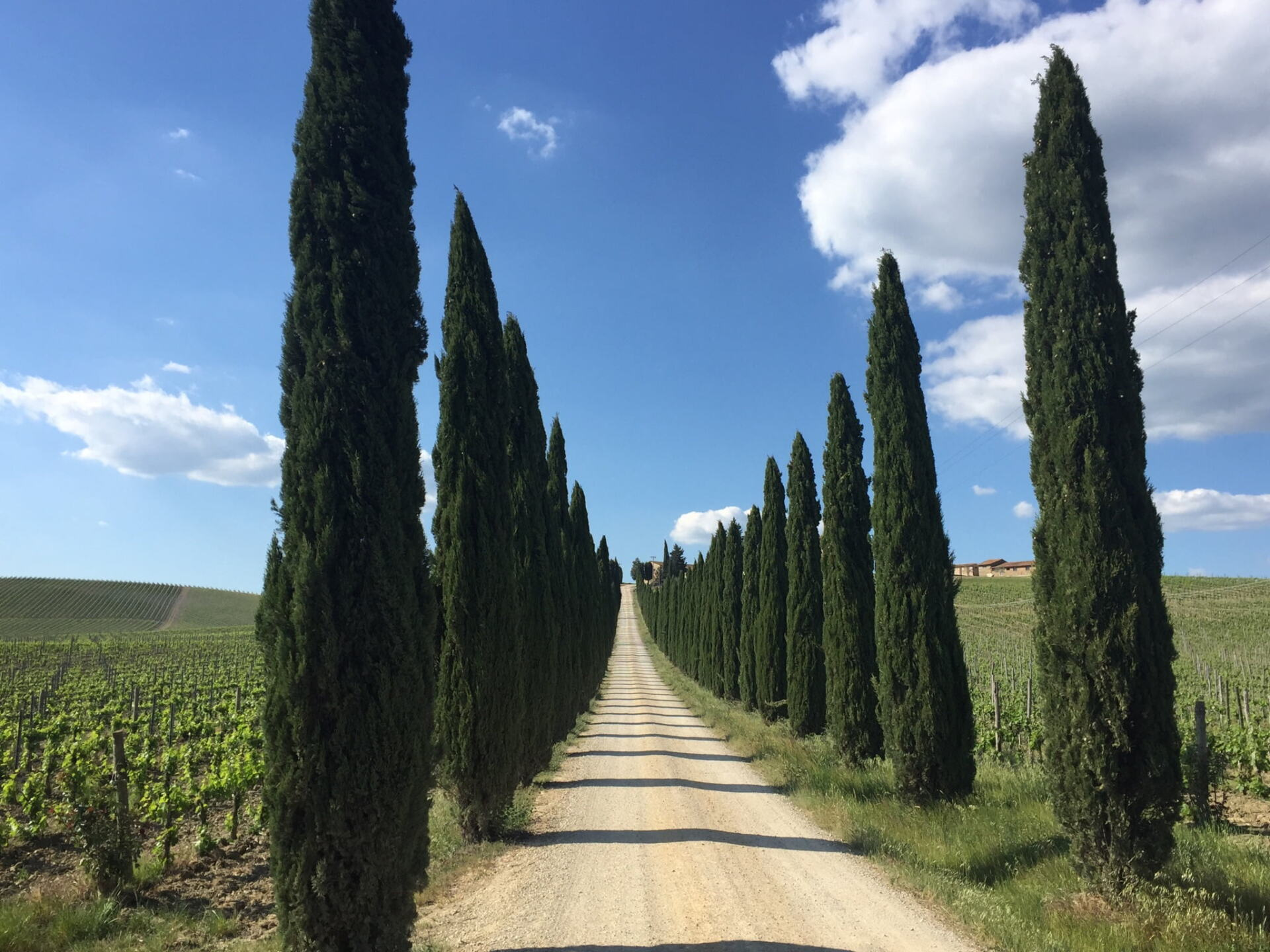 White road and Cypress Trees in Tuscany