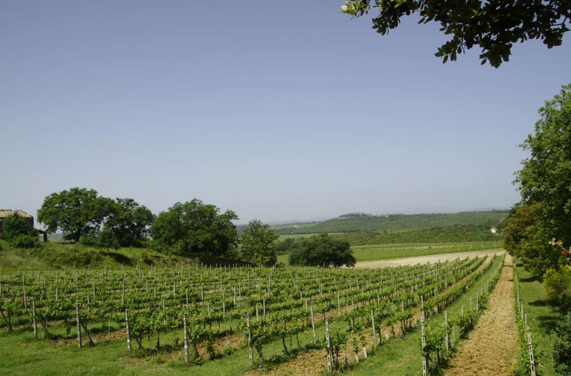 Nastagio Vines