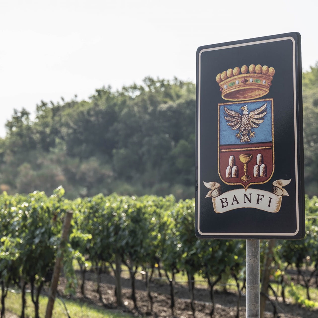 Castello Banfi Sign