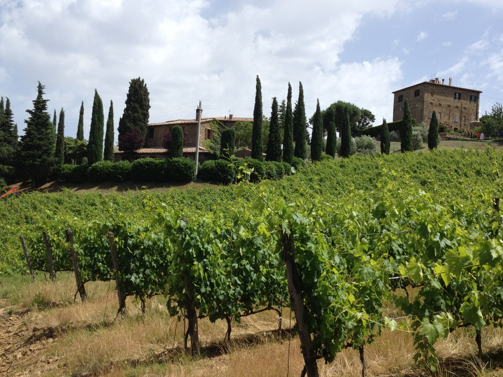 Rows of vines and villas in a Tuscan vineyard