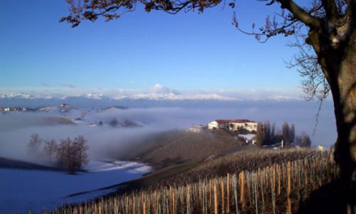 fog rising over vineyards in Italy