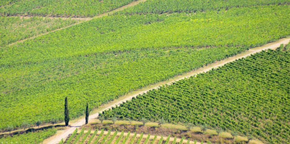 Fontodi Vineyards