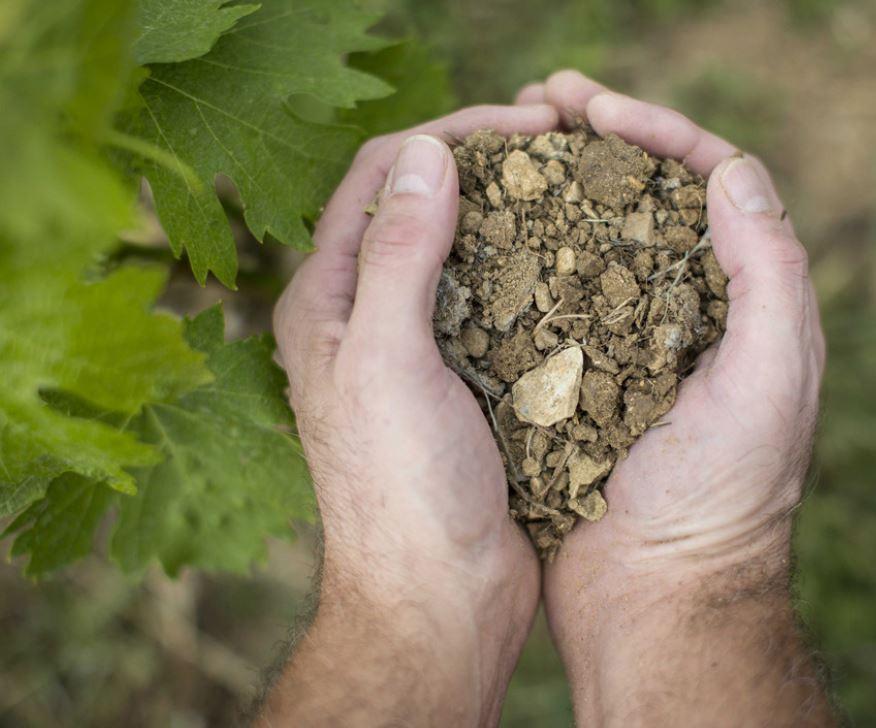 Antinori Dirt