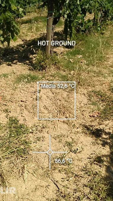 Harvest Report Temperatures