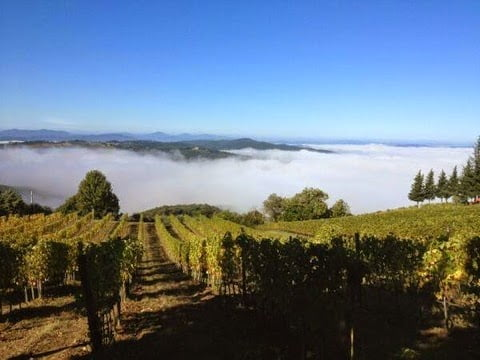 Fog rising on Brunello Vineyards