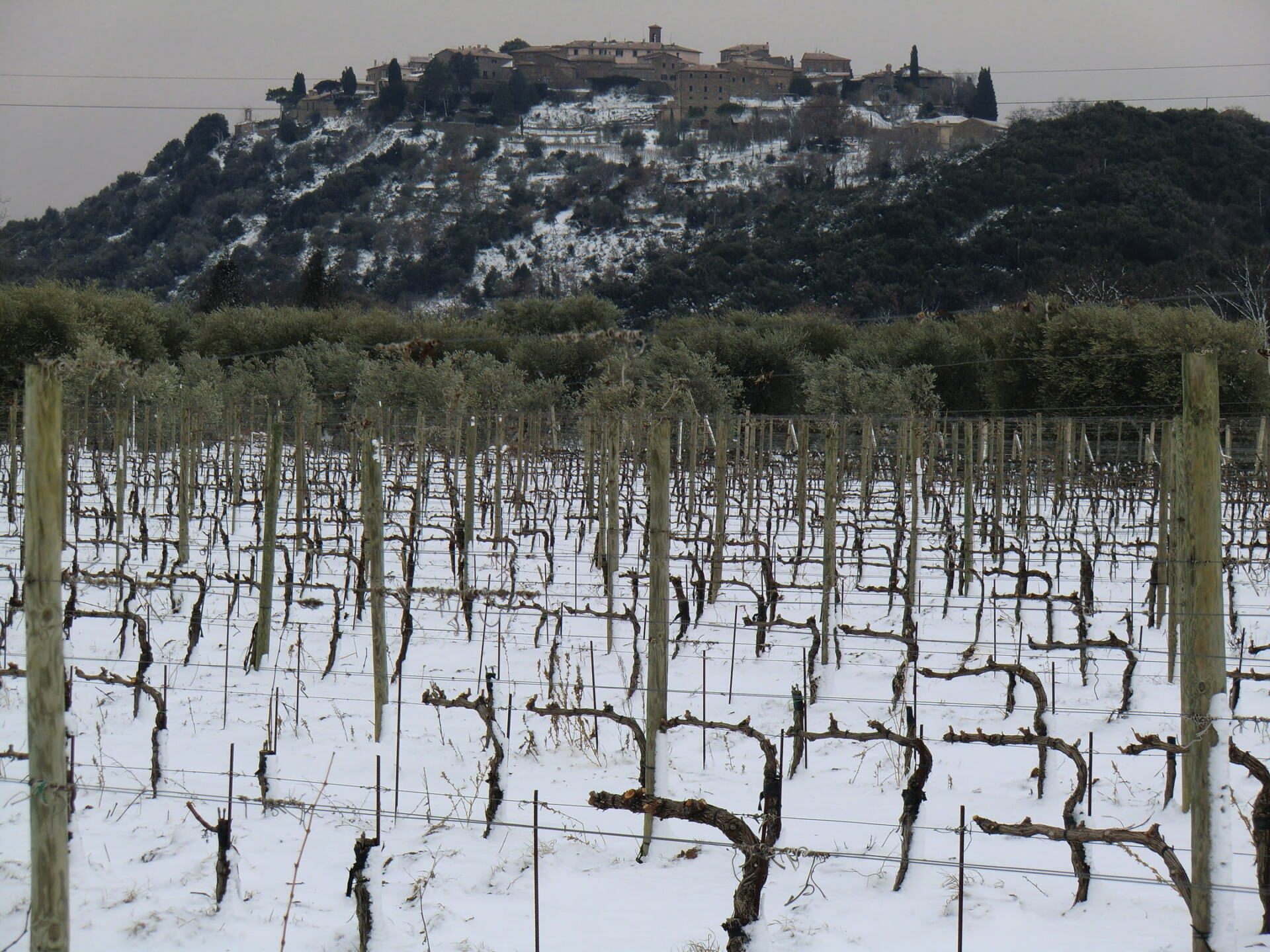 Medieval hill town in Tuscany and vineyards covered by snow