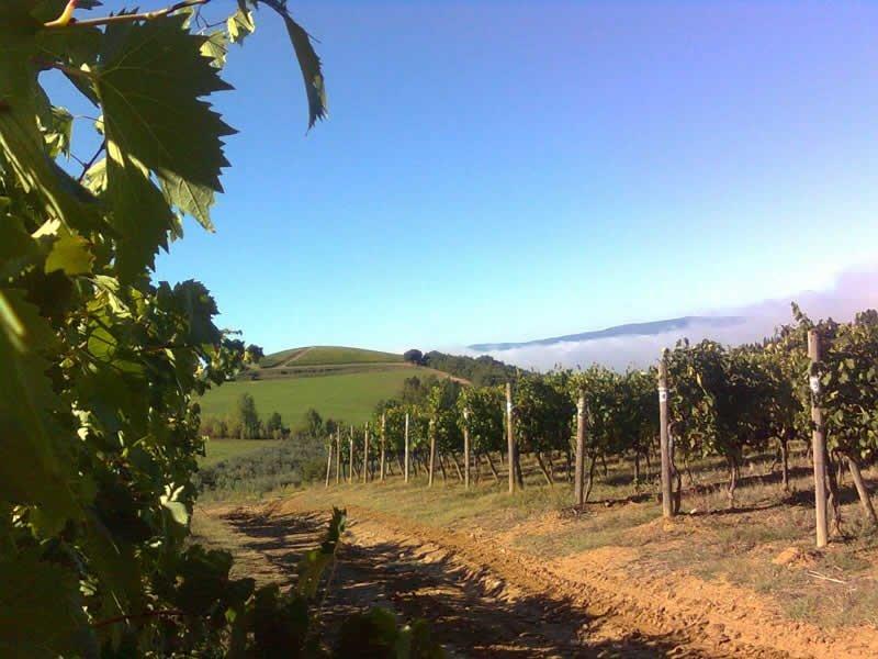 Monsanto vines