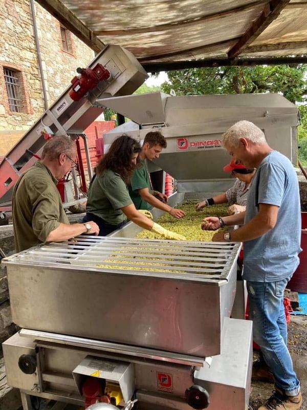 Monteraponi Harvest Report