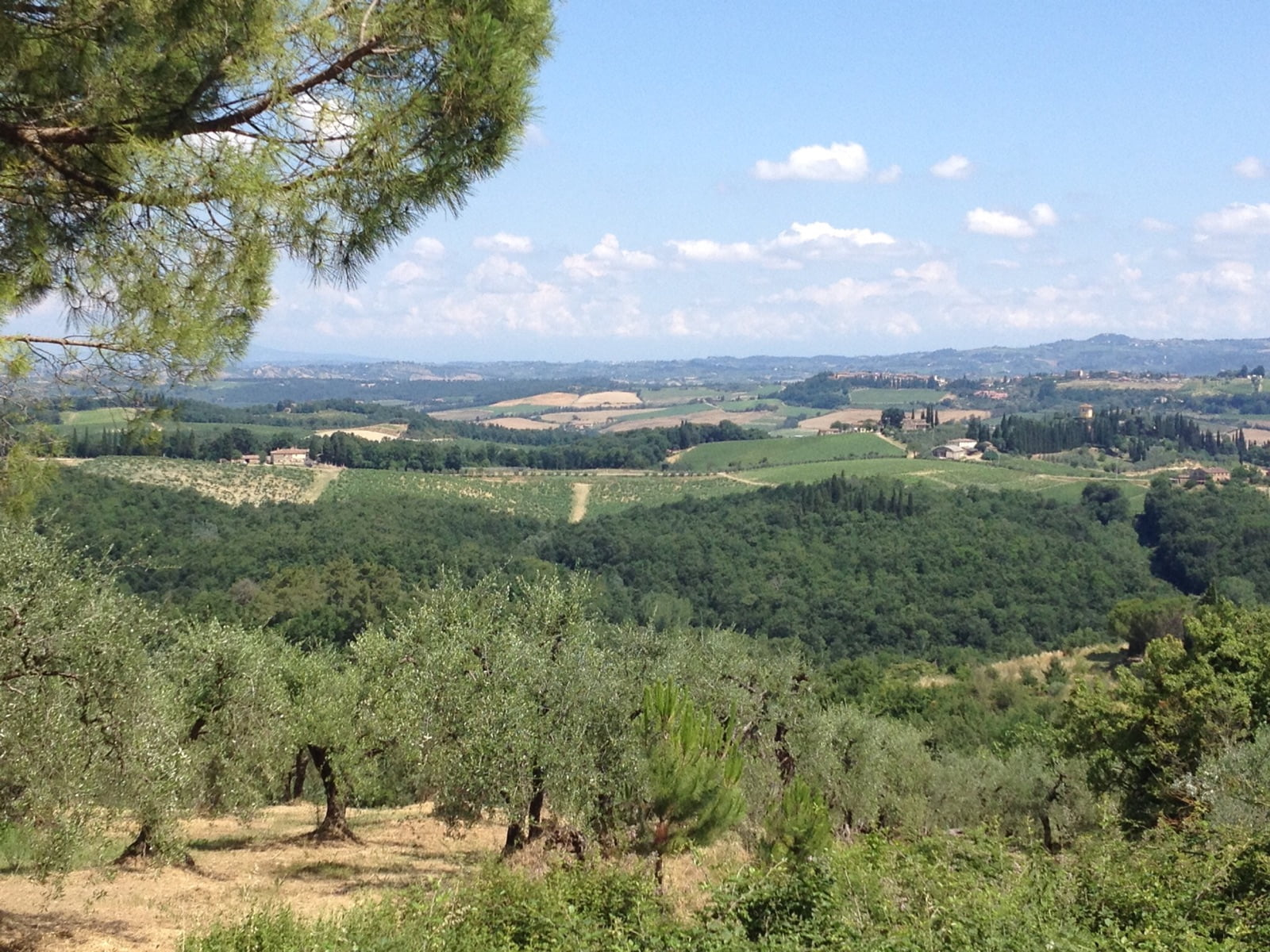 Olive trees, vineyards, hilltowns and forest in Tuscany
