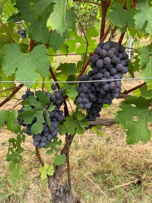 Harvest Report 2020