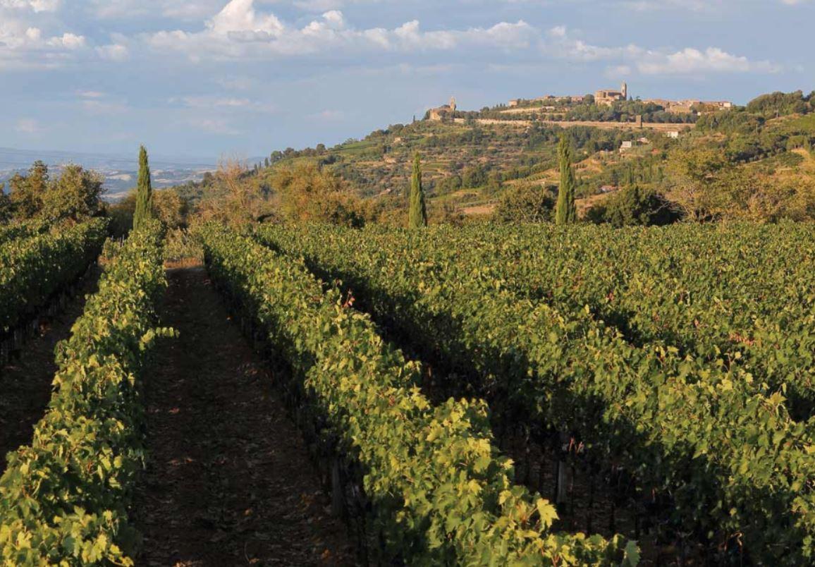 Le Potazzine Vines