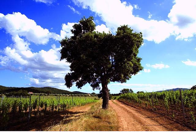 Querciabella oak