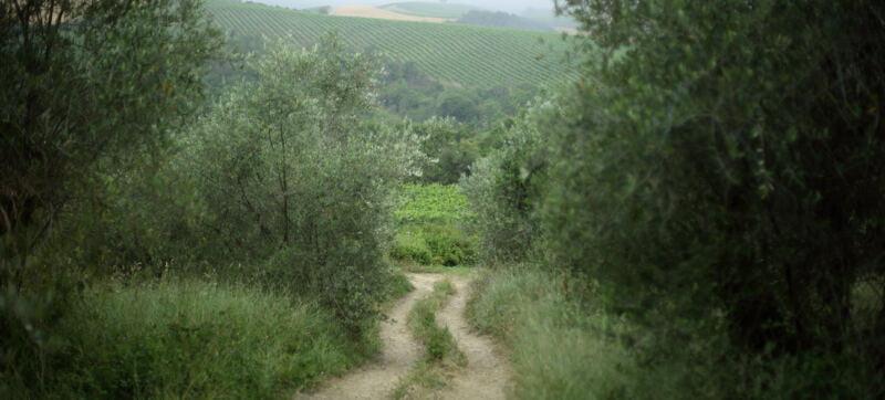 Rodano Road