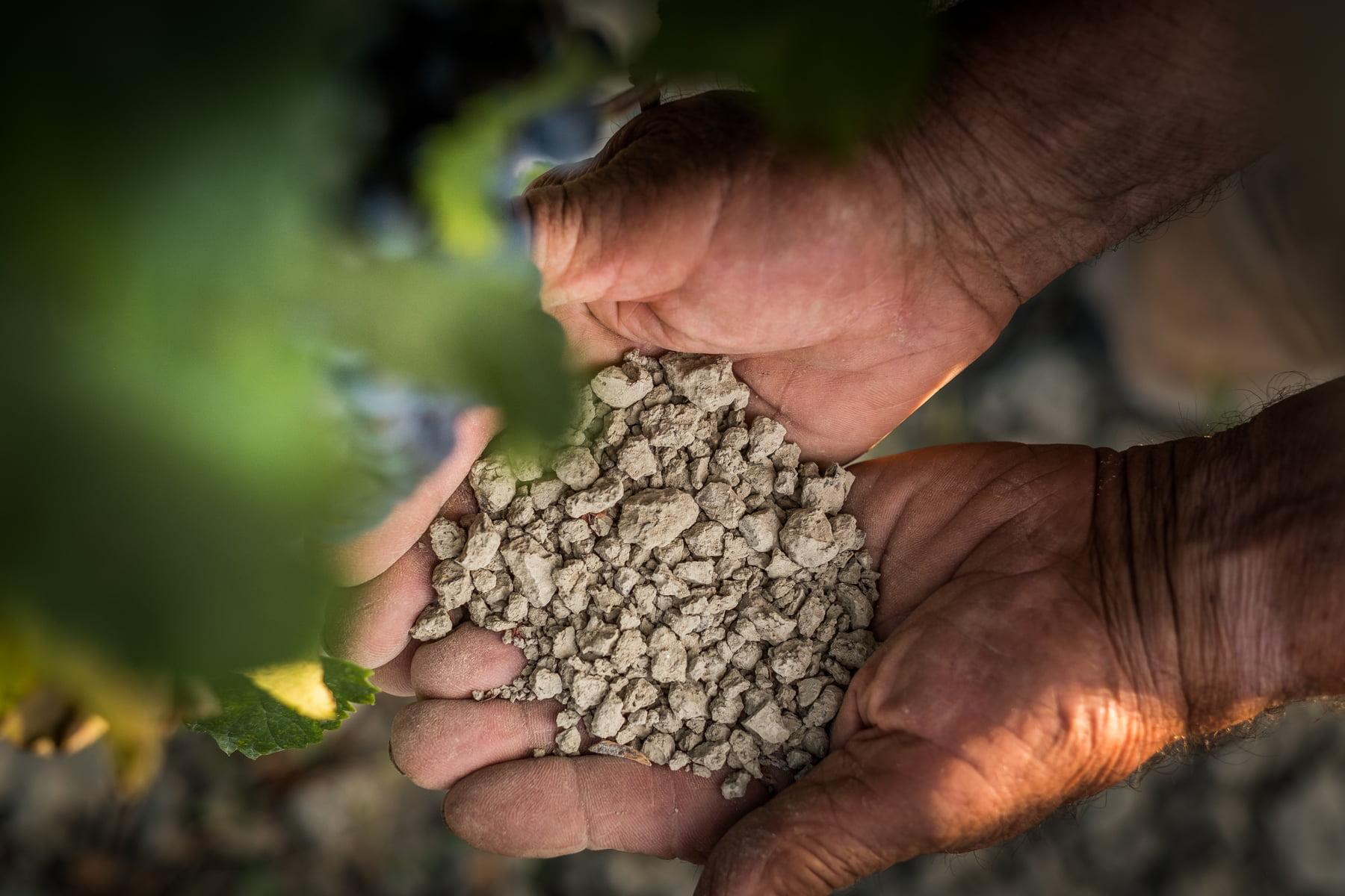 Montescudaio Soil