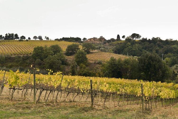 Scopone Vineyards