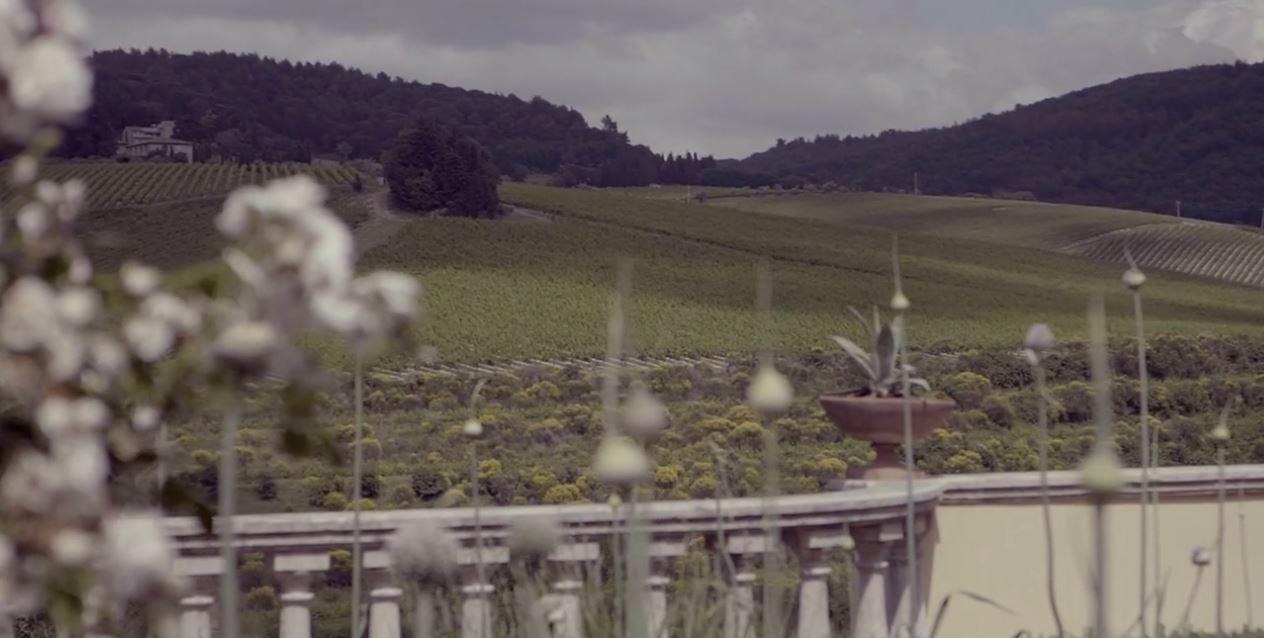 Solaia Vineyard