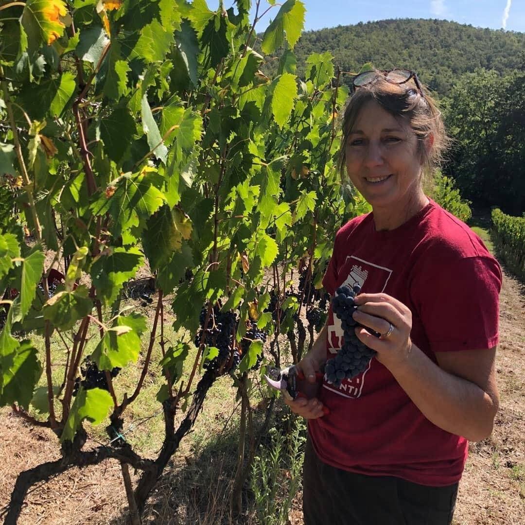 Setriolo vines