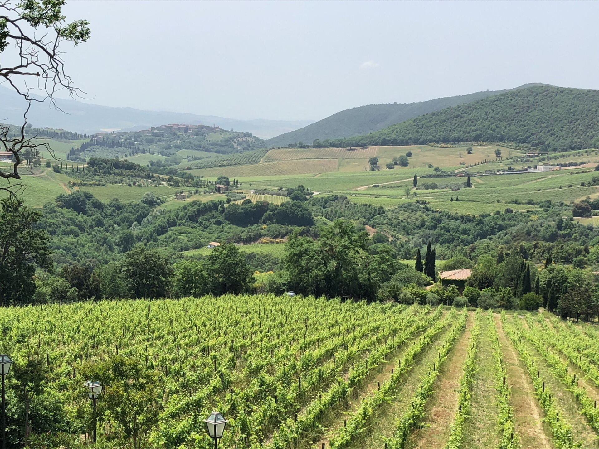 Terralsole Vineyards