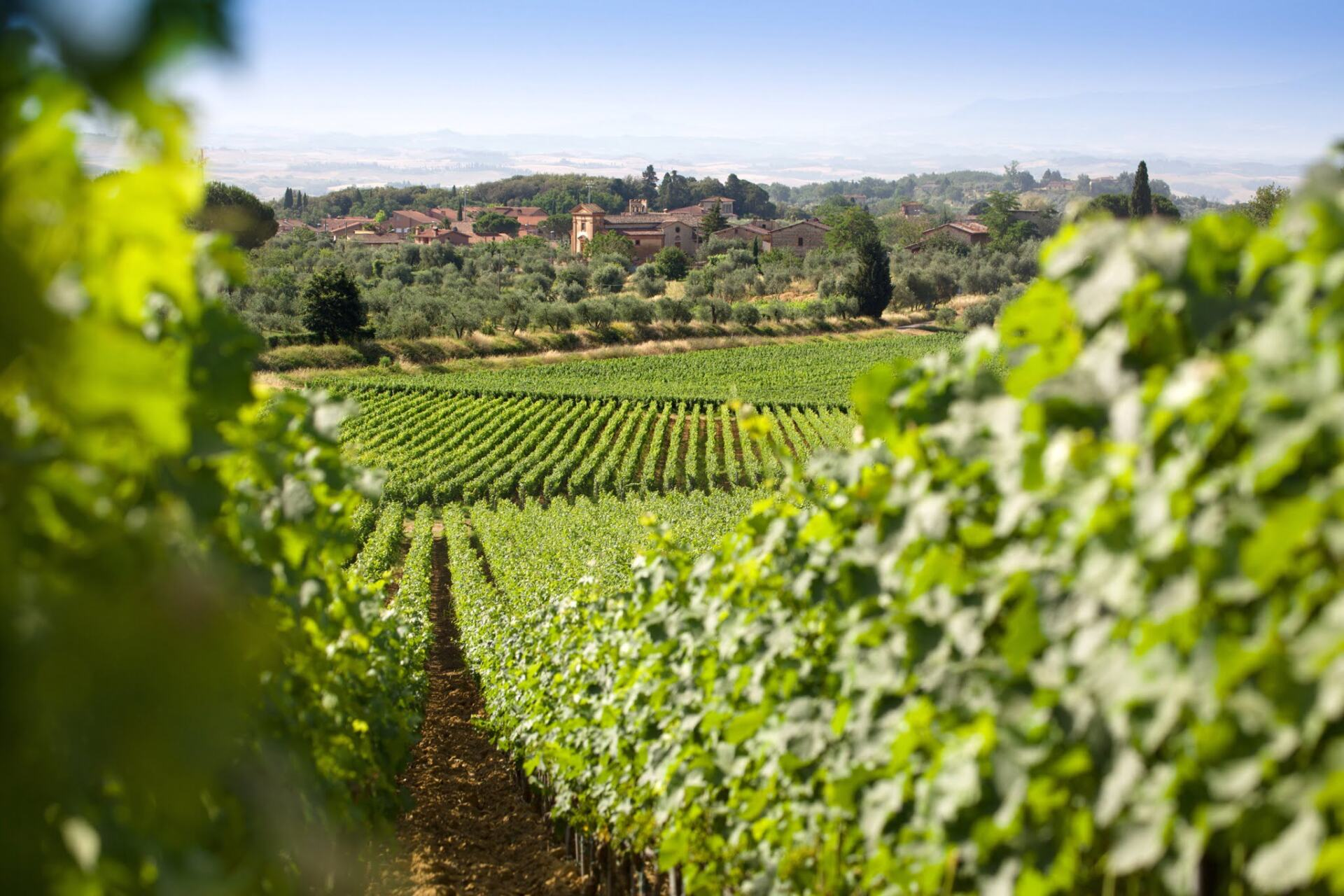 Grapevines and Tuscan hill towns