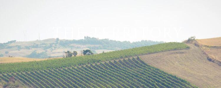 Tuscan Snips