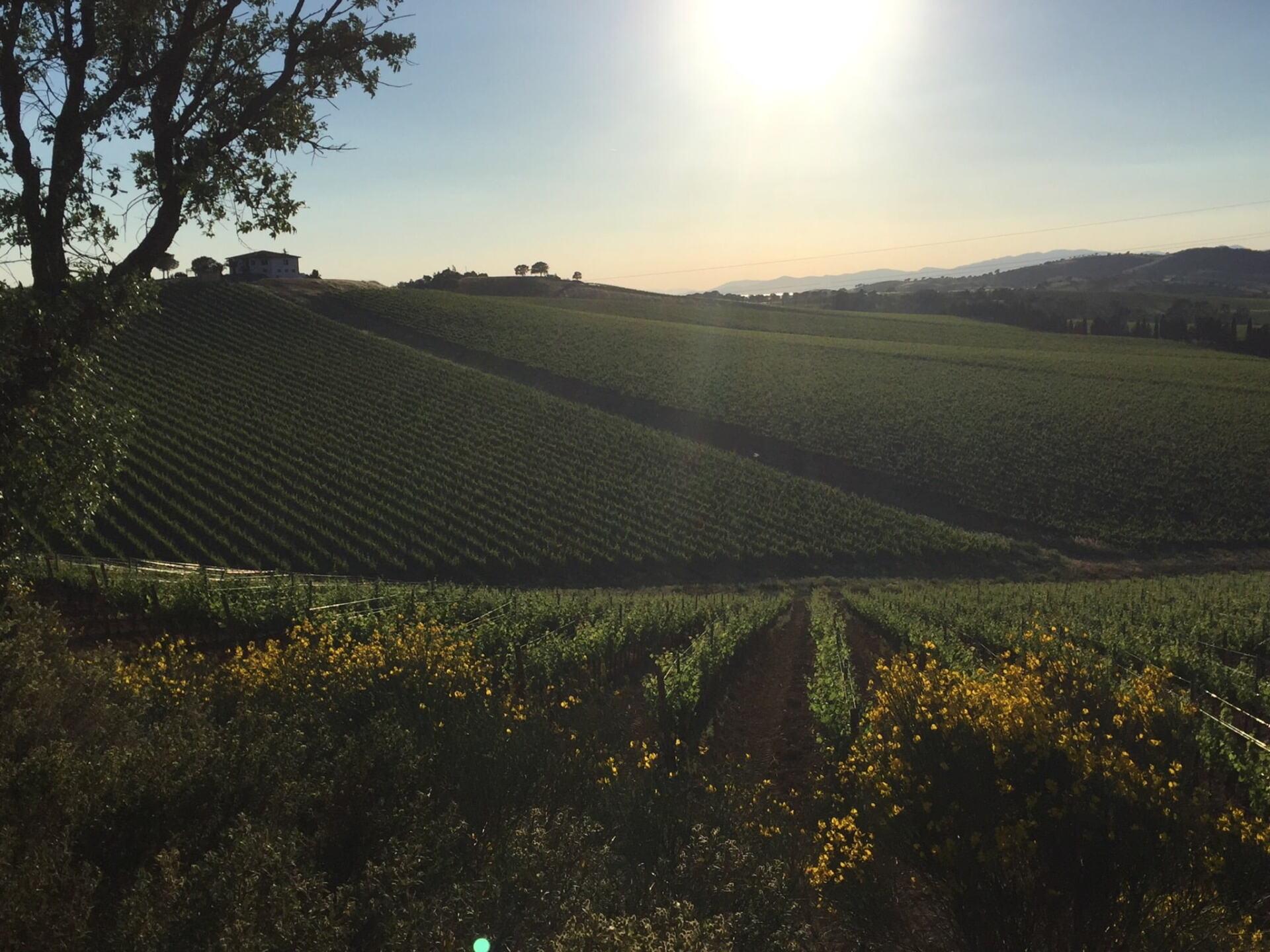 Val delle Rose Vineyards