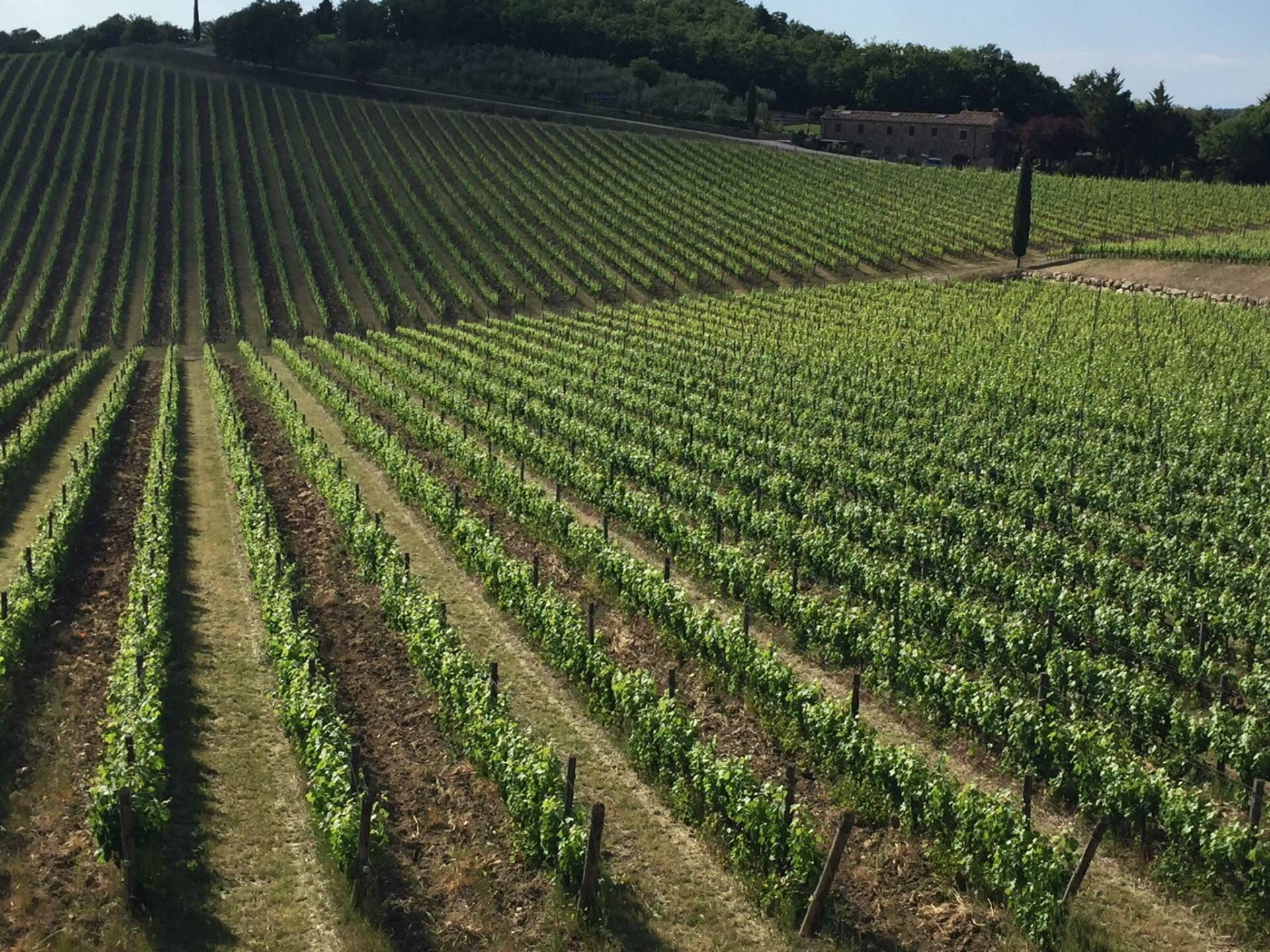 Primocolle Vineyards