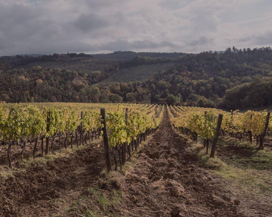 Ribaldoni Vineyards