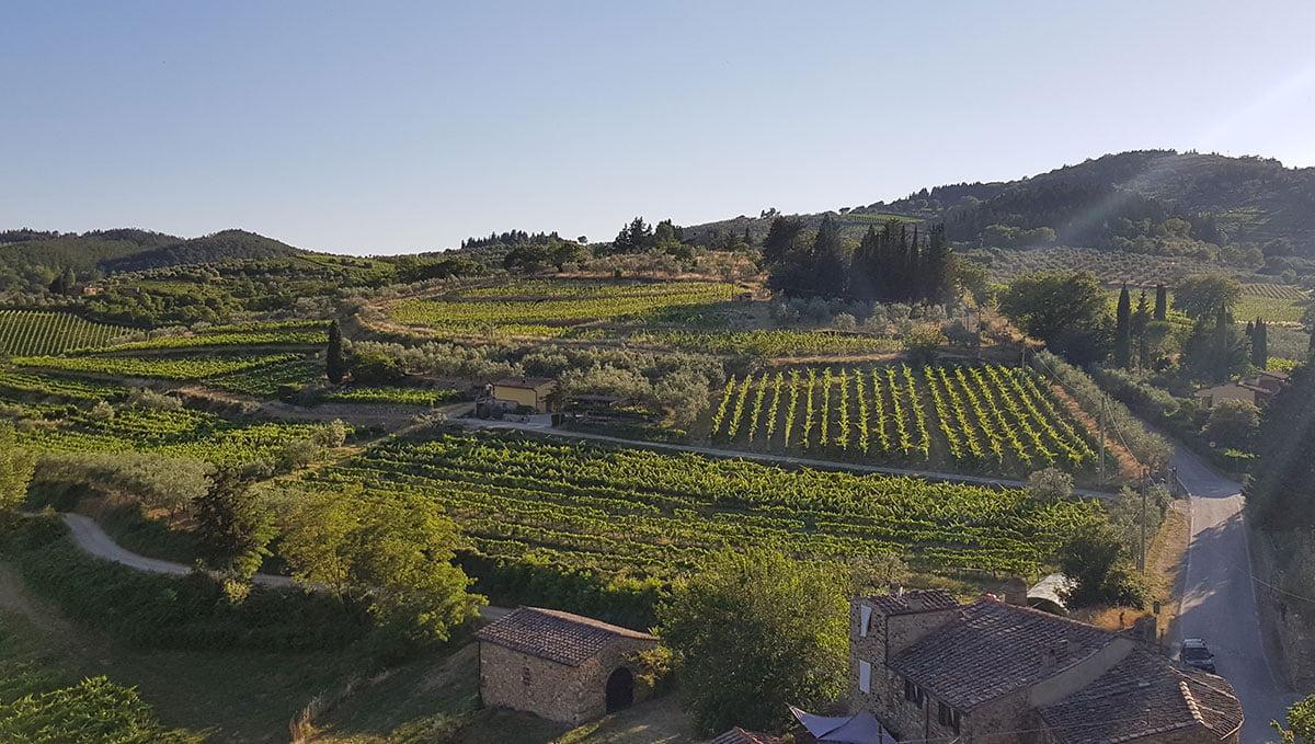 Sunlight on Montefioralle's vineyards